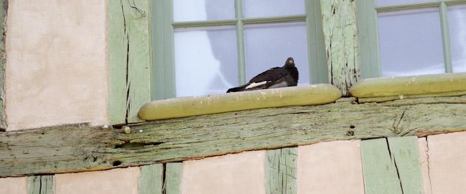 Fine art photography bird photography